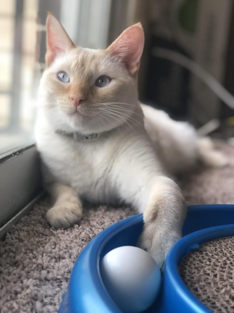 Bonzo the Cat (Nikki Neumann)